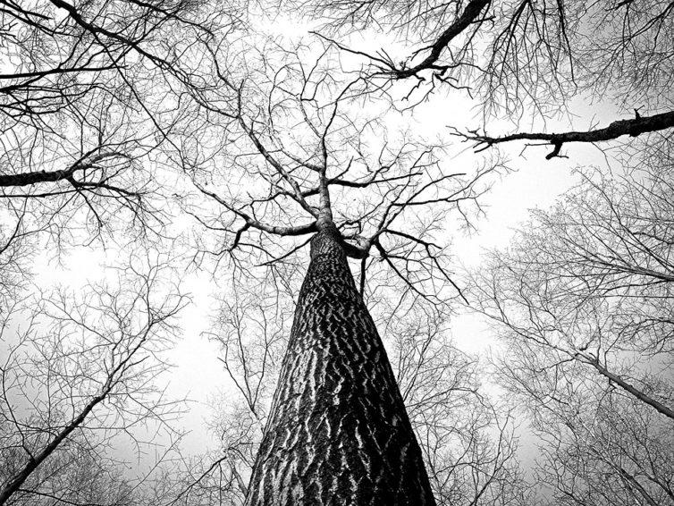 Stress Wood